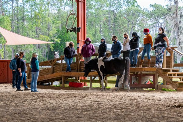 Participants during horse observation time for an EASE session.
