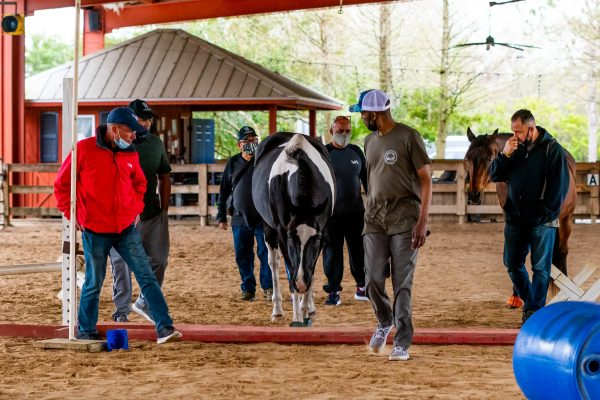 Veterans working together in an EASE session to overcome obstacles with the horses.